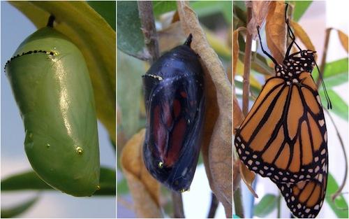 monarch-folder.jpg